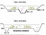 小龙虾养殖稻田设计视频及注意事项