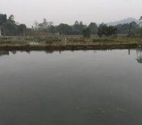 重庆市巴南区勇翔龙虾养殖基地