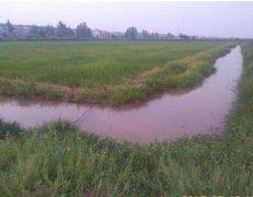 稻田小龙虾养殖的四个优点