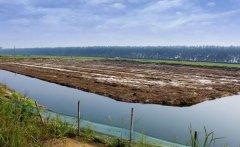 小龙虾养殖池塘肥水是什么意思?