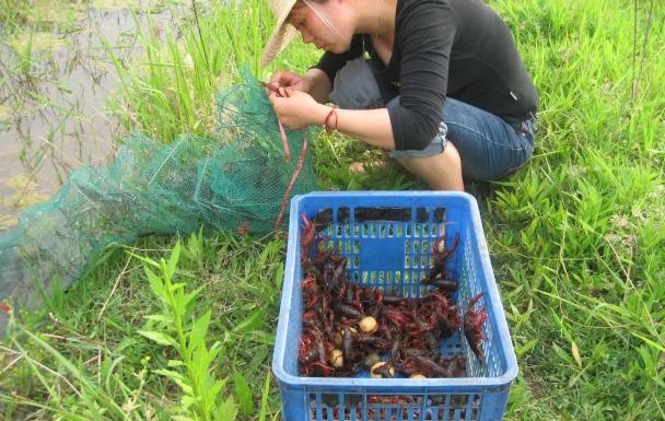 小龙虾养殖的成本是多少呢